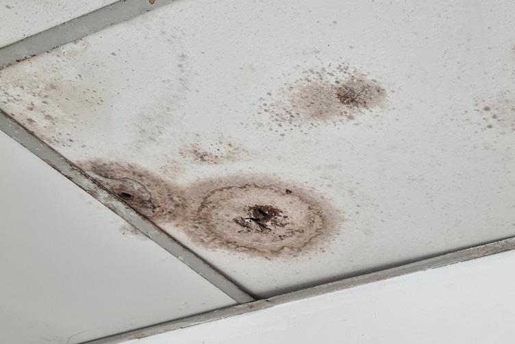 עובש בתקרה